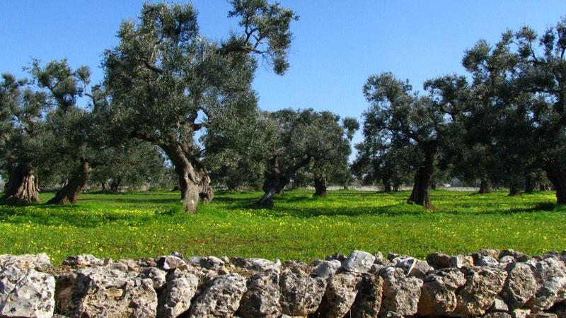 La natura in Puglia